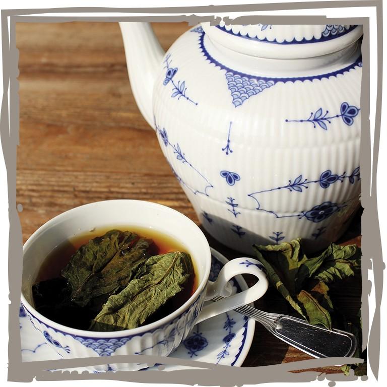 Berühmt Tee-Hortensie 'Heilende Süße', Landgefühl ® #ZD_72
